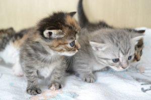 猫をかぶる(猫かぶり)の意味・語源・由来