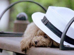 帽子 UVハット