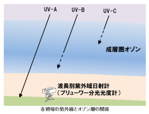 紫外線到達 UVA・UVB・UVC