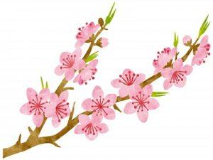 桃の節句 桃の花 イラスト 無料 フリー