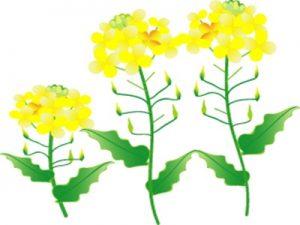 桃の節句 ひな祭り 菜の花 イラスト 無料 フリー