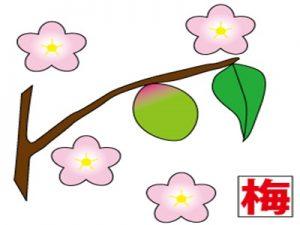 梅の実 イラスト 無料 フリー