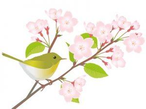 桜 うぐいす イラスト 無料 フリー