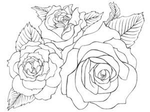 薔薇 イラスト 塗り絵 白黒 無料 フリー