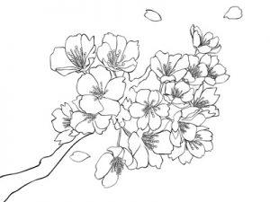 無料素材おすすめ桜のイラストかわいいオシャレ じゃぱね