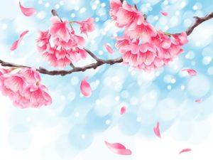 桜の枝 寒緋桜 イラスト 無料 フリー