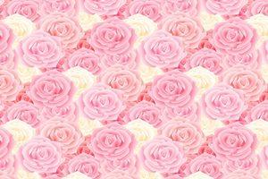 薔薇 バラ ピンク イラスト 背景 壁紙 無料 フリー