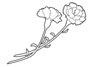 カーネーション イラスト 白黒 塗り絵 無料 フリー