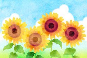 ひまわり 向日葵 イラスト 水彩画 手描き 無料 フリー