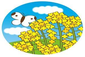 春 イラスト かわいい 菜の花 蝶 フリー 無料