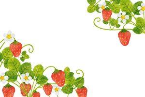 苺 いちご イラスト フレーム かわいい おしゃれ 無料 フリー