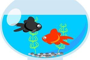 暑中見舞い イラスト 金魚 無料 フリー