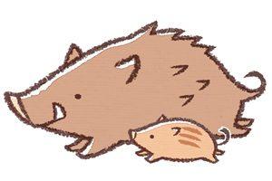 猪 イノシシ 親子 イラスト 無料 フリー