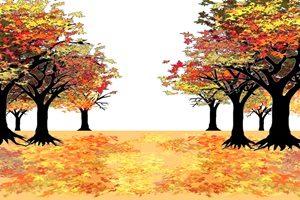もみじ 並木道 街路樹 イラスト 無料 フリー おしゃれ 綺麗
