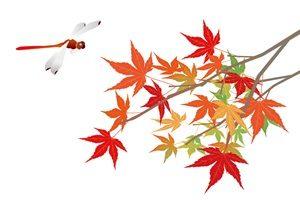 もみじ 赤とんぼ イラスト 無料 フリー おしゃれ かわいい 秋 紅葉