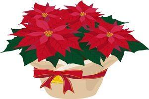 ポインセチア イラスト 鉢植え クリスマス 無料 フリー