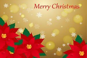 ポインセチア イラスト 背景 壁紙 クリスマス 無料 フリー