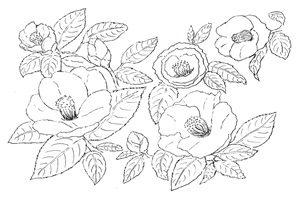 椿 イラスト 塗り絵 線が 無料 商用フリー