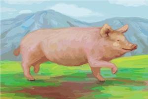 リアルな豚のイラスト