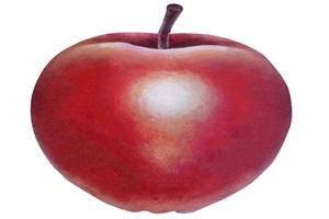 リアルなりんごのイラスト